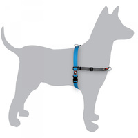 Black Dog Balance Harness Blue Medium