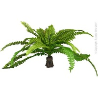Reptile Plant Fern on Rock Base XLarge