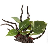 Ornament Driftwood with Anubias Small