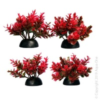 Foreground Plant Catspaw Red (4 Pack)