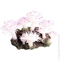 Copi Coral Tube Anemone Large