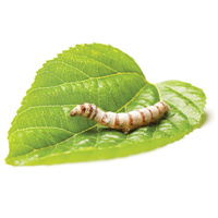 Silkworms Live (10 Pack)