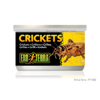 ExoTerra Crickets Canned